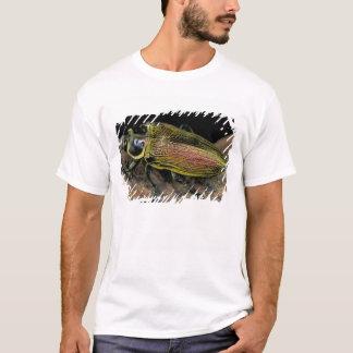 CA, Panama, Barro Colorado Island, Buprestid T-Shirt