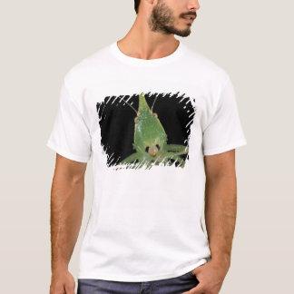 CA, Panama, Barro Colorado Island.  Green T-Shirt