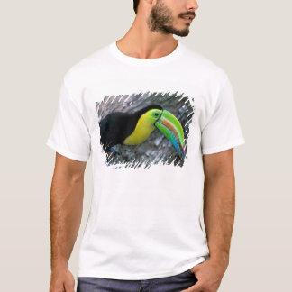 CA, Panama, Barro Colorado Island, Keel-billed T-Shirt