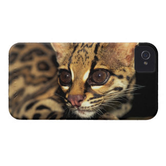 CA, Panamá central, Soberania NP, Margay 2 iPhone 4 Protector