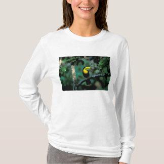 CA, Panama, Soberania NP, Keel-billed Tucan in T-Shirt