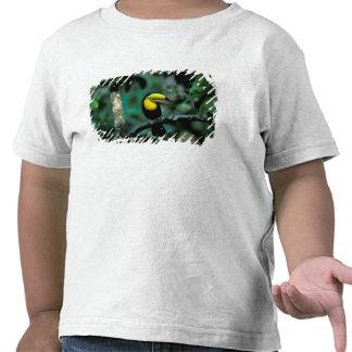 CA, Panama, Soberania NP, Keel-billed Tucan in T Shirts