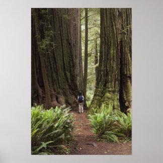 CA, parque de estado de las secoyas de Jedediah Sm Impresiones