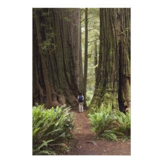CA, parque de estado de las secoyas de Jedediah Sm Fotografía