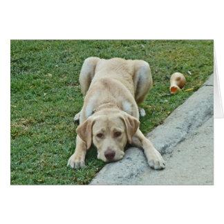CA perrito amarillo Notecards de Labrador Tarjeta De Felicitación