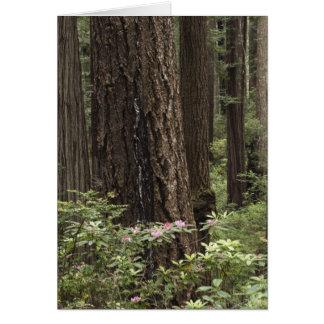 CA, Prairie Creek State Park, Coast Greeting Cards