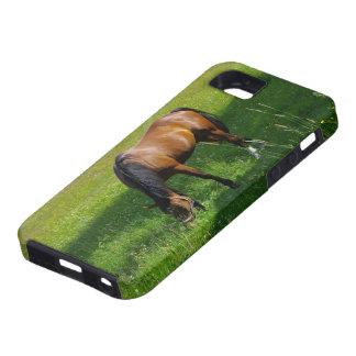 Caballo #1 iPhone 5 Case-Mate carcasas