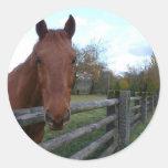 Caballo amistoso por la cerca pegatina redonda