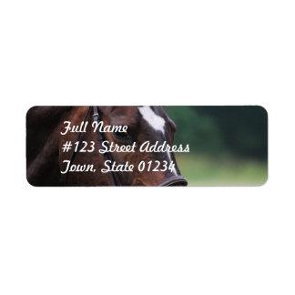 Caballo árabe con blanco en etiqueta de correo de etiqueta de remite