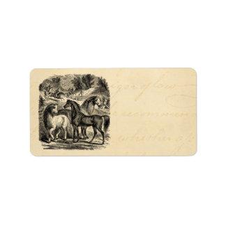 Caballo árabe del Cossack del carro de los caballo Etiqueta De Dirección
