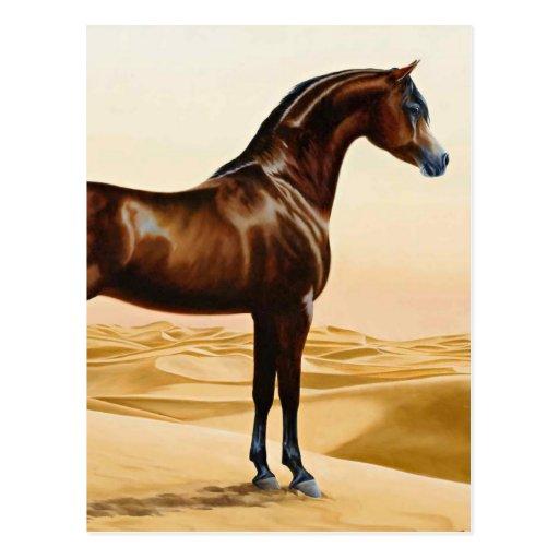 Caballo árabe - Guillermo Barraud Postales