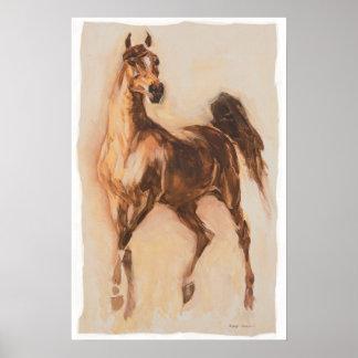 caballo árabe posters