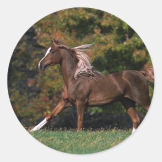 Caballo árabe que corre en campo herboso etiqueta redonda