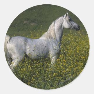 Caballo árabe que se coloca en flores etiqueta redonda