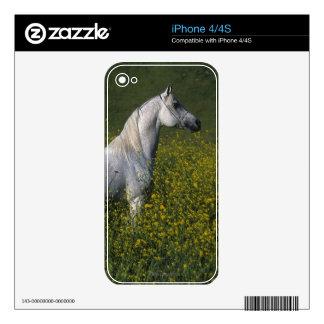 Caballo árabe que se coloca en flores skins para eliPhone 4S