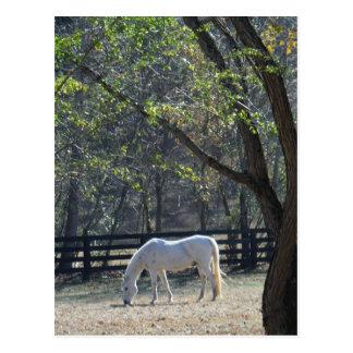 Caballo blanco en árboles postal