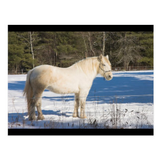 Caballo blanco en el invierno Maine rural Postal