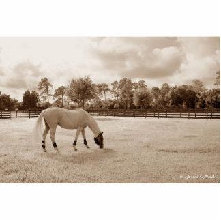 caballo blanco en pasto que pasta sepia esculturas fotográficas