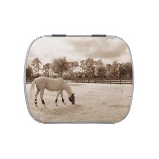 caballo blanco en pasto que pasta sepia frascos de caramelos