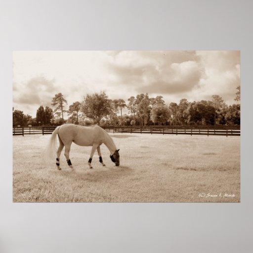 caballo blanco en pasto que pasta sepia impresiones