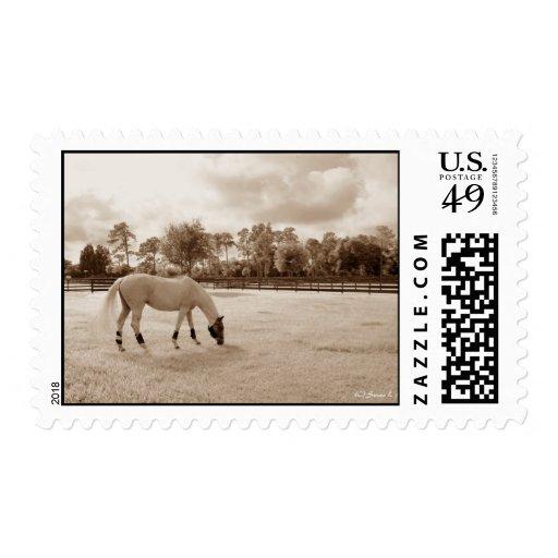 caballo blanco en pasto que pasta sepia sello