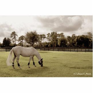 caballo blanco en pasto que pasta viejo estilo esculturas fotográficas