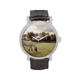 caballo blanco en pasto que pasta viejo estilo reloj de mano