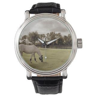 caballo blanco en pasto que pasta viejo estilo relojes