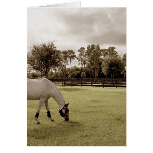 caballo blanco en pasto que pasta viejo estilo tarjetas