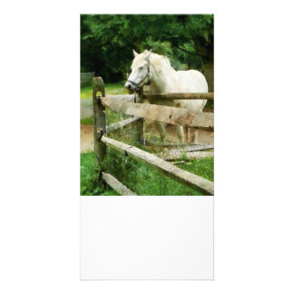 Caballo blanco en prado plantilla para tarjeta de foto