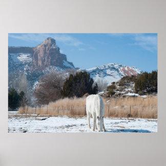 Caballo blanco en un campo del invierno posters