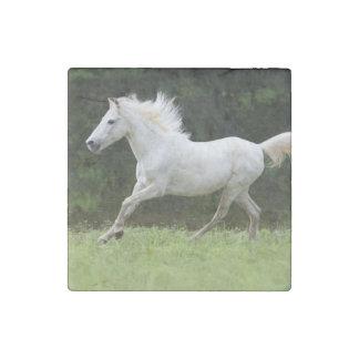 Caballo blanco galopante imán de piedra