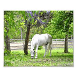 Caballo blanco majestuoso fotografía