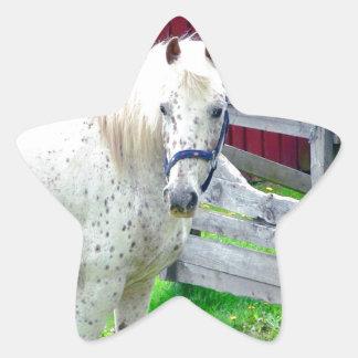 Caballo blanco pegatinas forma de estrella personalizadas