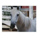 caballo blanco postal