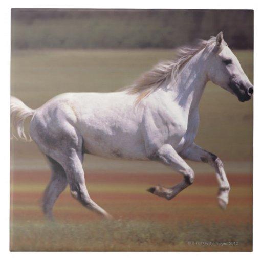 Caballo blanco que corre en campo azulejos ceramicos