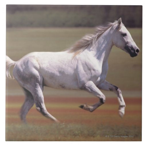 Caballo blanco que corre en campo azulejo