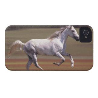 Caballo blanco que corre en campo Case-Mate iPhone 4 cárcasas