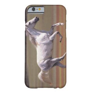 Caballo blanco que corre en campo funda de iPhone 6 barely there