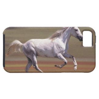 Caballo blanco que corre en campo funda para iPhone 5 tough