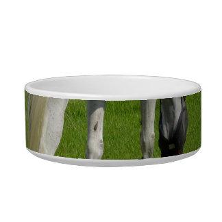 caballo blanco que pasta la cabeza abajo en hierba tazones para gatos