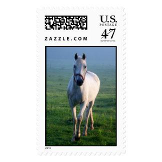 Caballo blanco timbres postales