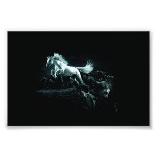 Caballo blanco y el ataque de lobos salvajes fotografía