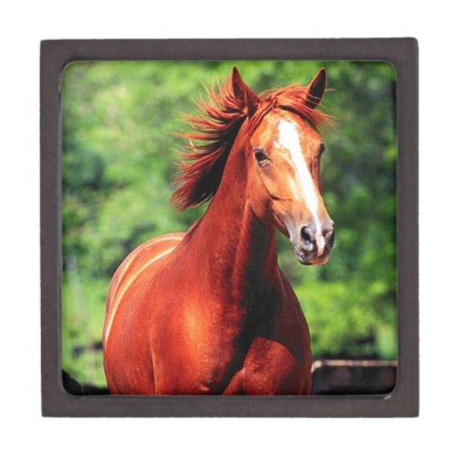 caballo con una capa roja caja de regalo de calidad