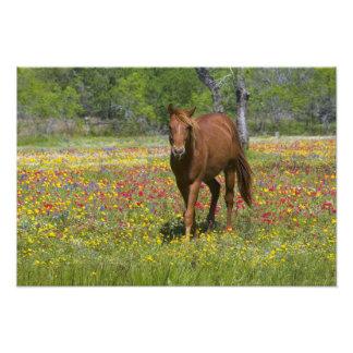 Caballo cuarto en el campo de wildflowers cerca fotografías