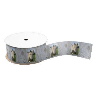 Caballo cuarto gris en tablero blanqueado lazo de tela gruesa