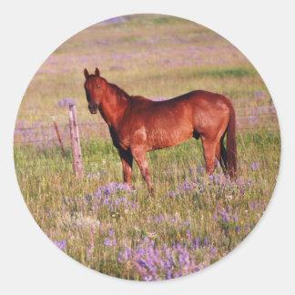 caballo cuarto pegatina redonda