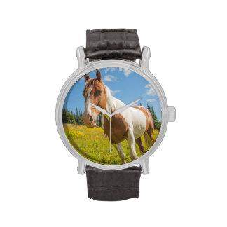 Caballo curioso en un prado alpino en verano relojes de pulsera