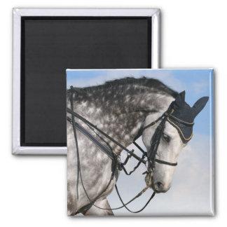 caballo dapple-gris imán cuadrado