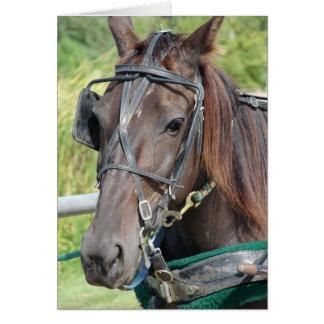 Caballo de Amish en el poste que engancha Tarjeta De Felicitación